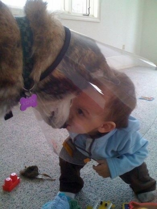 This dog that will embrace the cone of shame to have secret meetings with the tiny human.