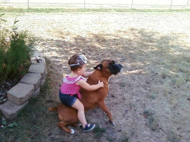 This dog that will be the pony every kid has always wanted.