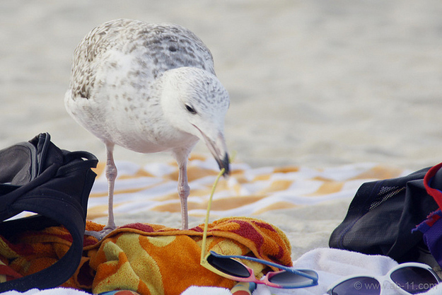 Seagulls stealing your shades