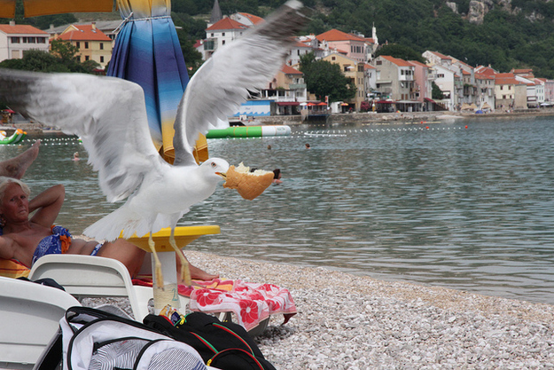 Seagulls stealing your food