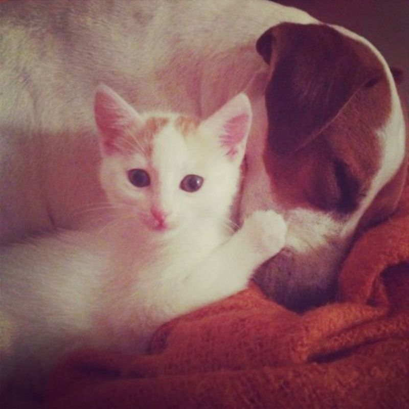 Dog dad for stray kittens4 605