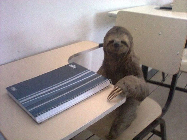 The Sloth Who Just Aced His Final Exam In Midday Napping