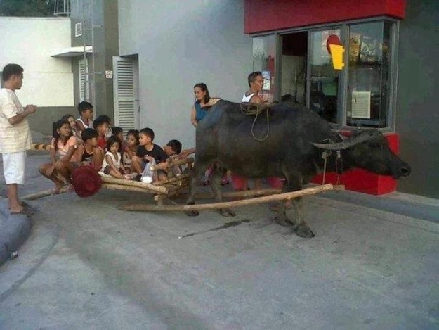 Kids pulled by an ox