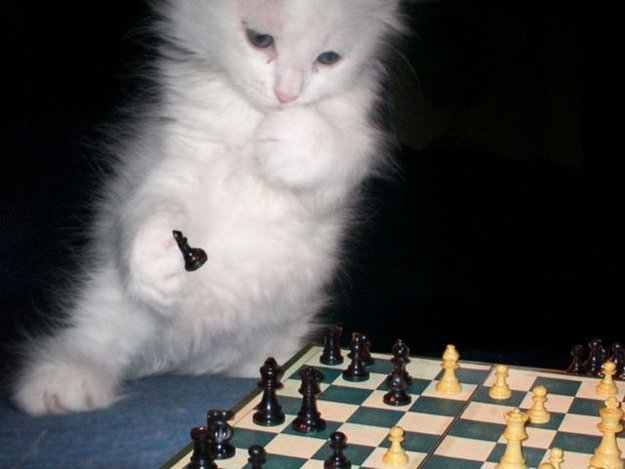 The Kitten Who Regularly Enters Chess Tournaments