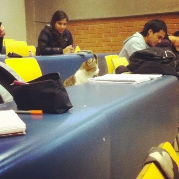 The Cat Who Asks Questions In Lectures