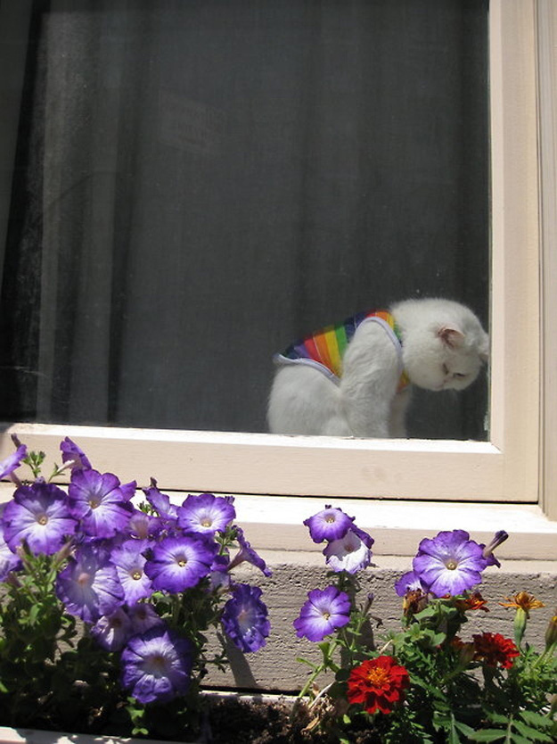 This gay cat who just wants to be his fabulous self.