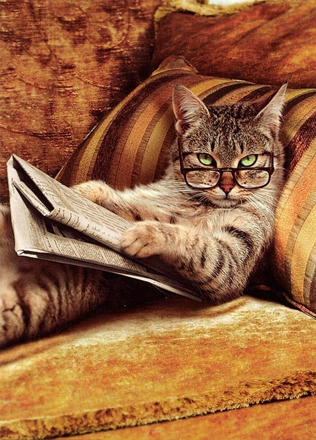 The Cat Who Always Reads The Business Pages