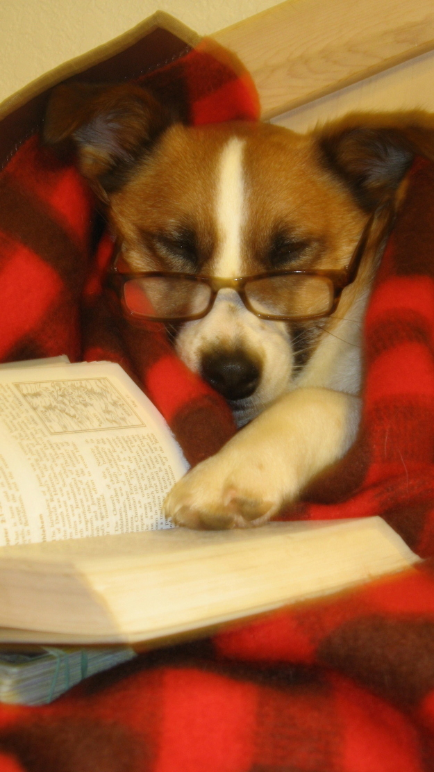 The Dog Who's Read The Entire Works of Tolstoy