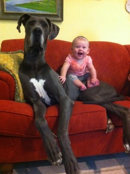 This dog who takes babysitting too seriously.