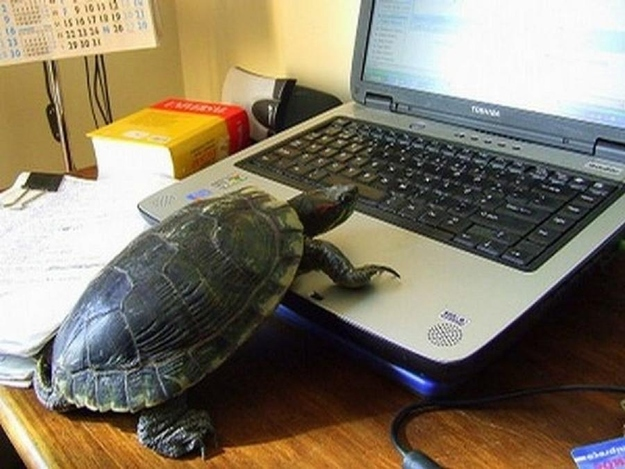 The Turtle Who's Busy Perfecting His Powerpoint Skills