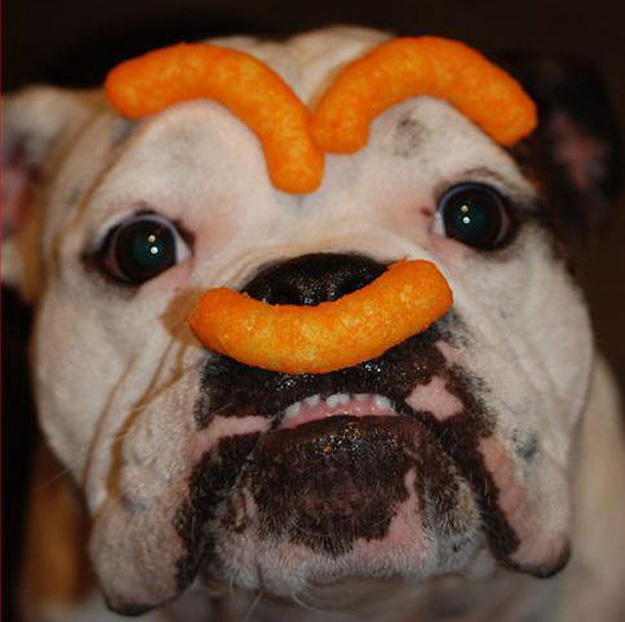 This cheese puff dog.
