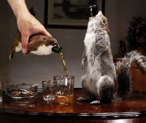 Squirrel Beer