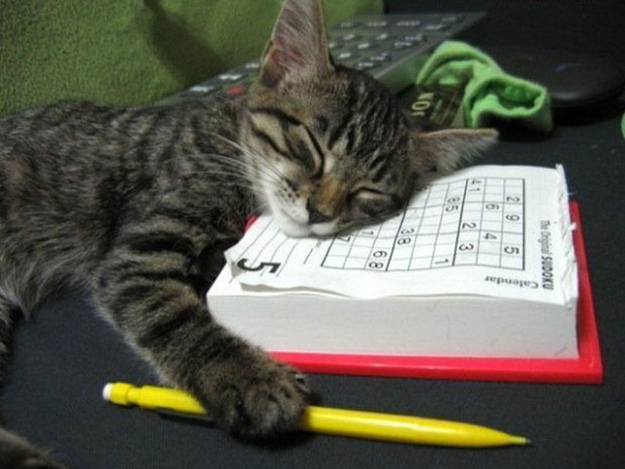 The Cat Who Does Sudoku On The School Bus