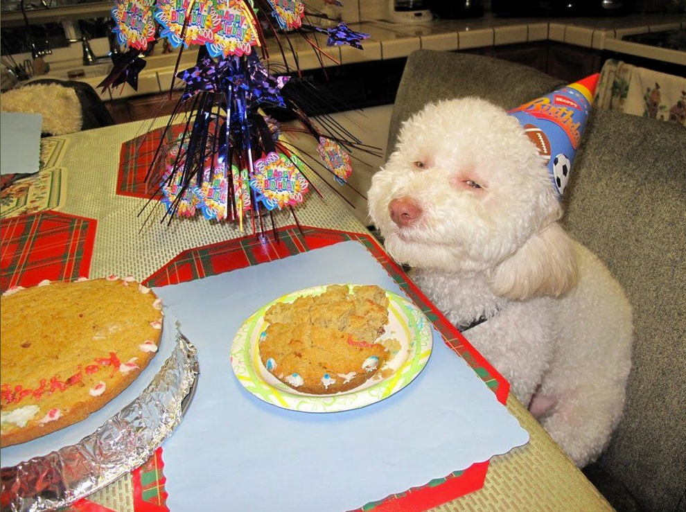 Four legendary birthday parties for, respectively, a stoned dog, two chinchillas, an existential cat, and Ludwig the elephant.