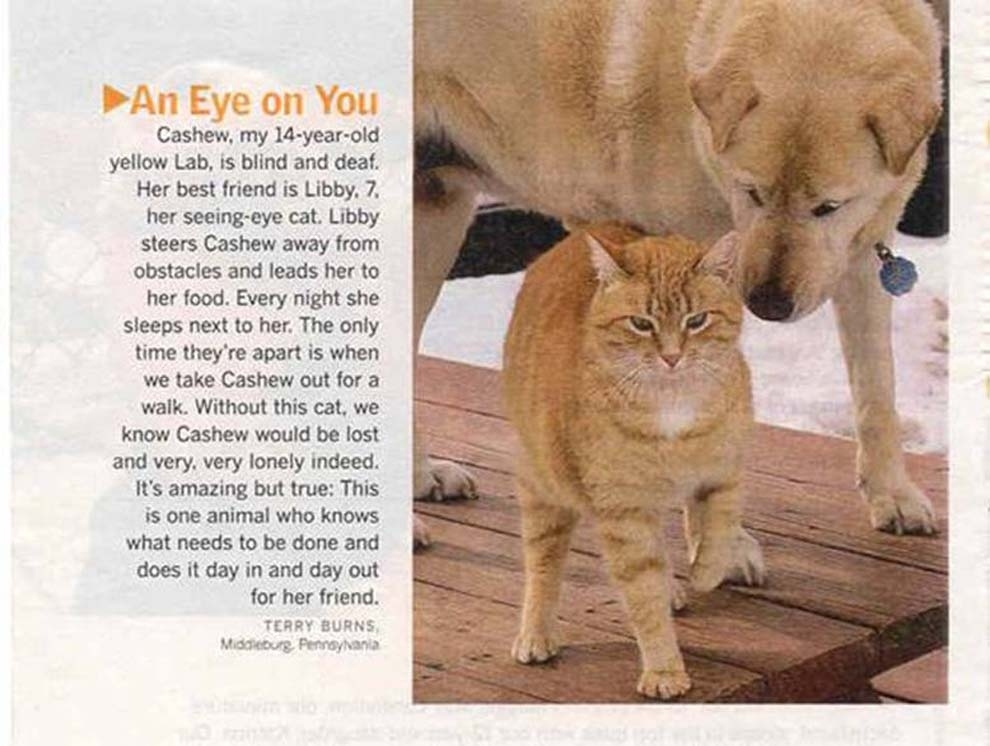 """And also while we are on the """"seeing-eye"""" topic, let's talk just real quicklike about this seeing-eye cat who see-eyes for a labrador out of the great and glorious goodness of her heart."""