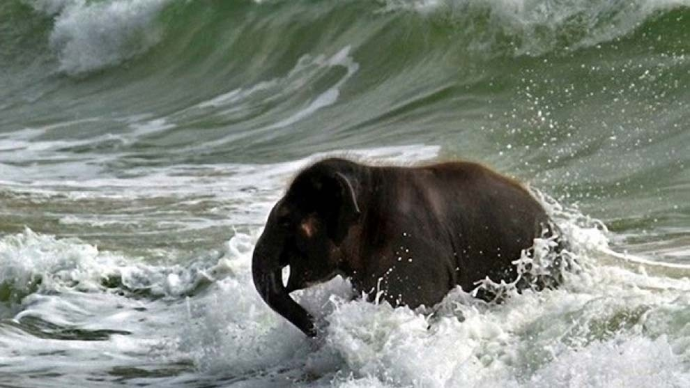 The baby elephant who spent a day at the beach and had the time of her life.